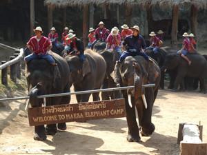 Maesa Elephant Camp Chiang Mai Thailand