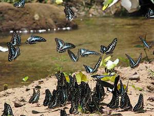 Pang Sida National Park Sa Kaeo Thailand