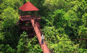 Peninsular Botanic Garden (Thung Khai) Trang Thailand