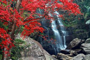 Khun Pong Waterfall Loei Thailand