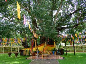 Wat Ton Pho Si Maha Pho Prachin Buri Thailand